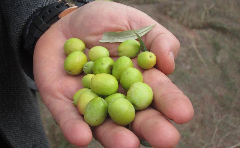 アイヴァルク種の早摘み果実のみ