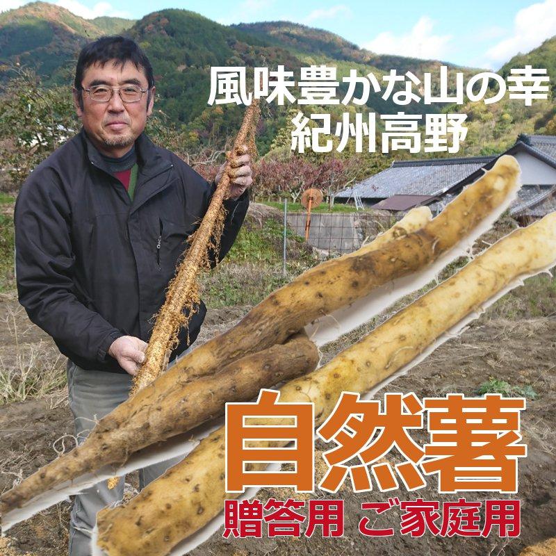 紀州高野自然薯