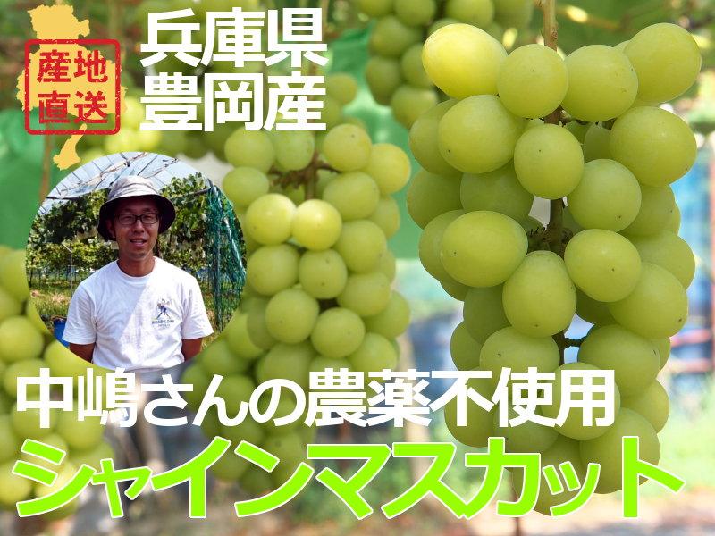 兵庫県豊岡産中嶋さんのシャインマスカット