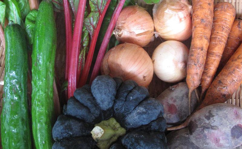 無農薬野菜販売のご案内