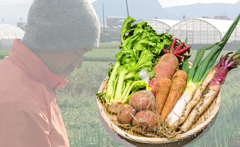 旬の野菜6品をお届けします