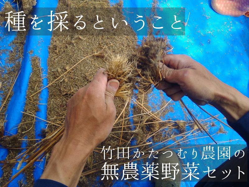 種を採るということ竹田かたつむり農園の無農薬野菜セット