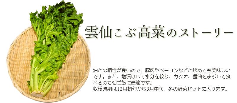 雲仙こぶ高菜のストーリー