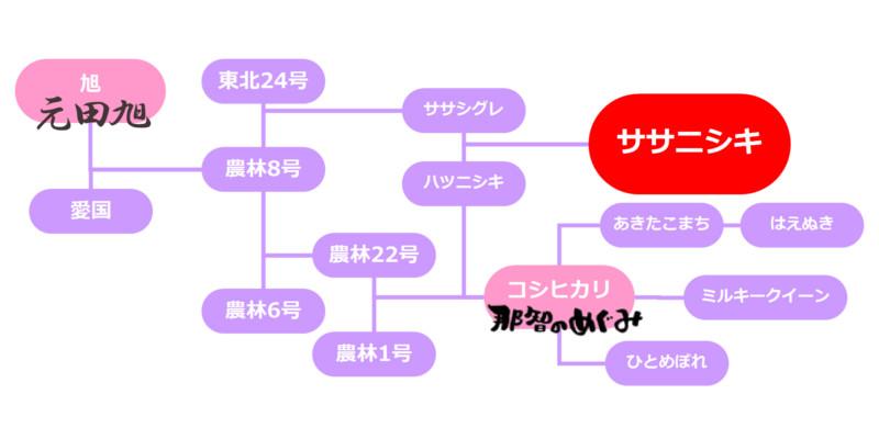 ササニシキ系統図