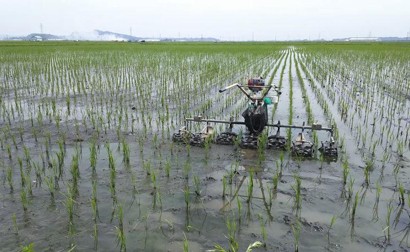 生き物で溢れる自然栽培の田んぼ草取り