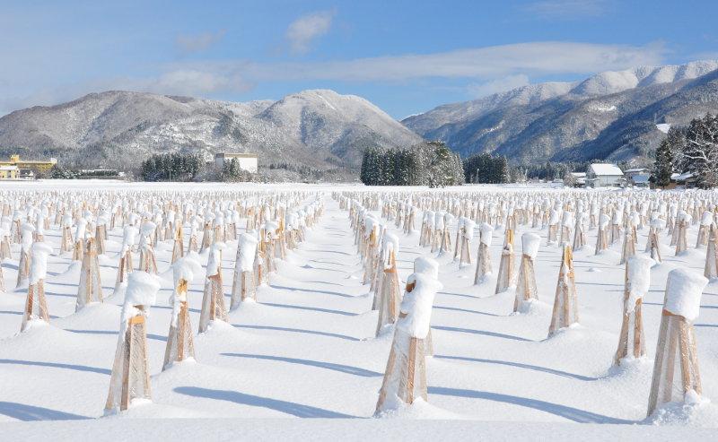 エコニコ農園冬囲い