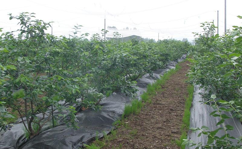 エコニコ農園