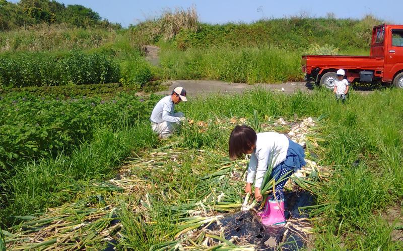 竹田かたつむり農園玉ねぎ畑