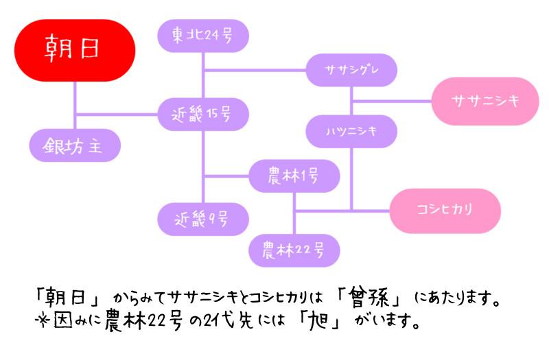 朝日米の系譜