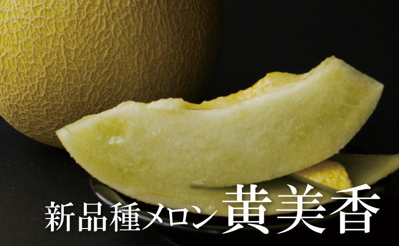 新品種メロン黄美香