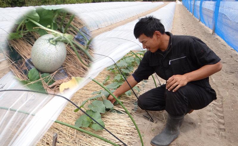 的場農場のメロン作り