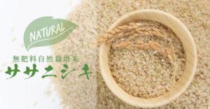 無肥料自然栽培米ササニシキ
