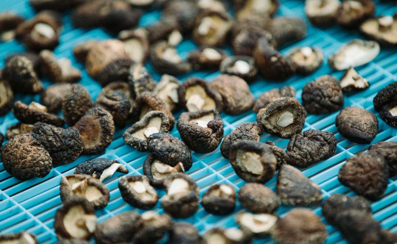 干し椎茸のグアニル酸