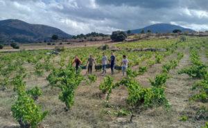 エルバラコの有機農法
