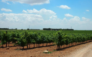 ビオディナミの畑