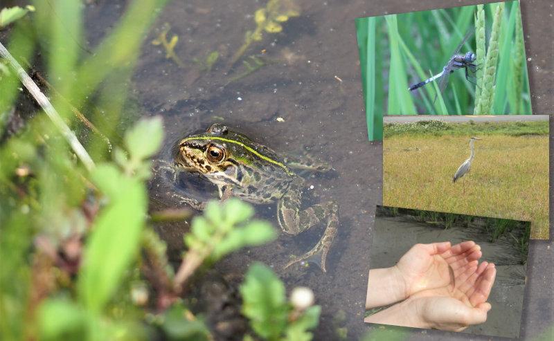 杉さんの自然米カエル