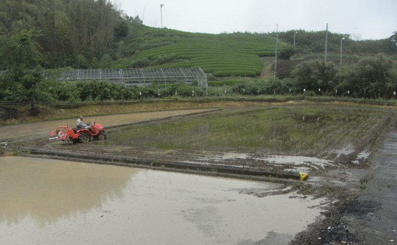 杉さんの自然米米作り