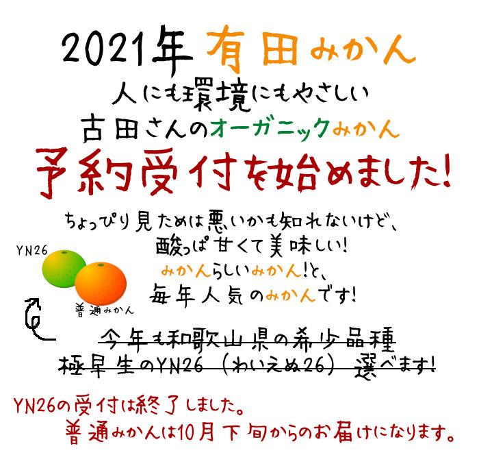 有田みかん予約受付中YN26は受付終了しました